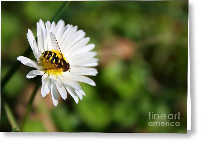 First Spring Bee Greeting Card