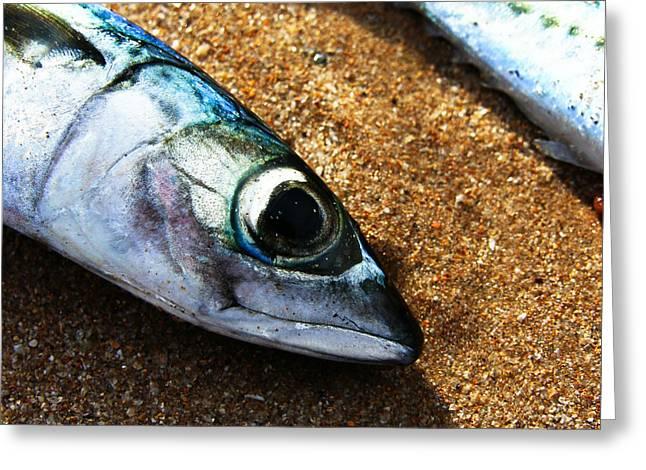 Fish Greeting Card by Daniel Kulinski