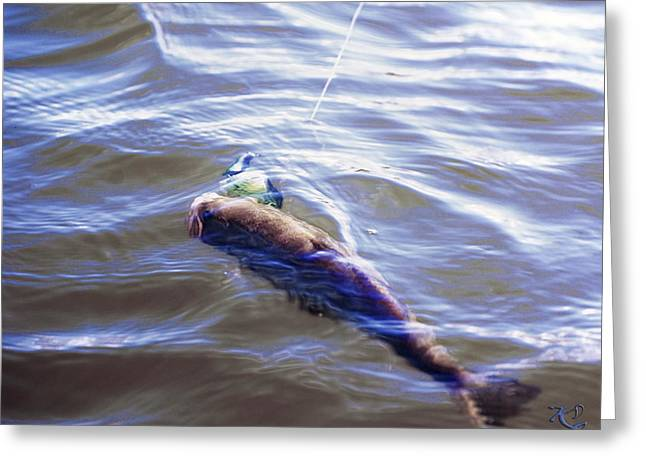 Fish In The Water Greeting Card by Kelly Rader