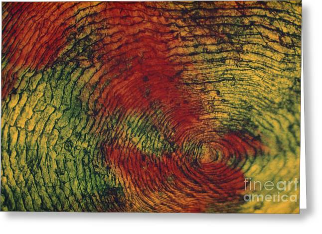 Fish Scale Greeting Card by Eric V. Grave
