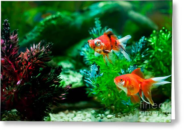Greeting Card featuring the photograph Fish Tank by Matt Malloy