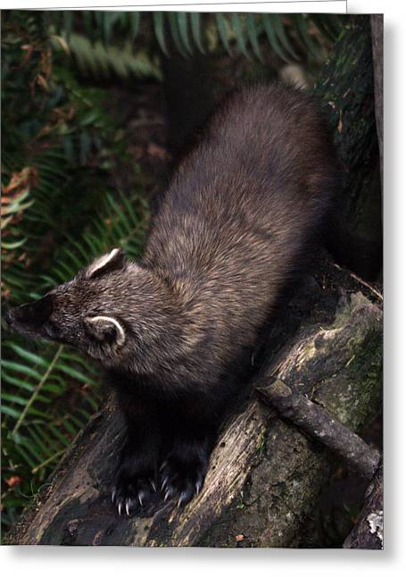Fisher - 0005 Greeting Card