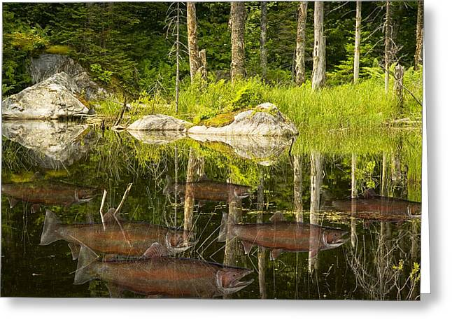Fisherman's Dream Trout Pond Greeting Card by Randall Nyhof