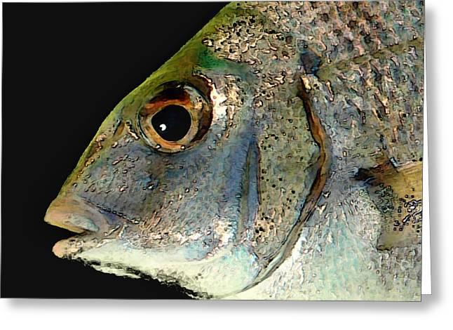 Fisheye Greeting Card