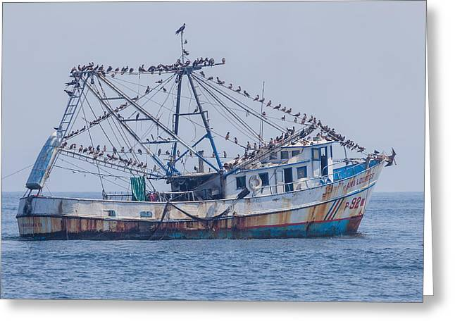 Fishing Boat With Birds Greeting Card