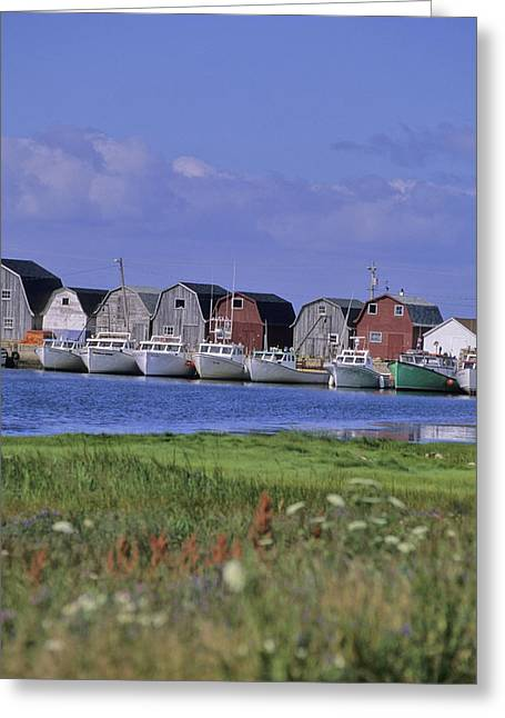 Fishing Shacks Line The Bay At Malpeque Greeting Card by Leanna Rathkelly