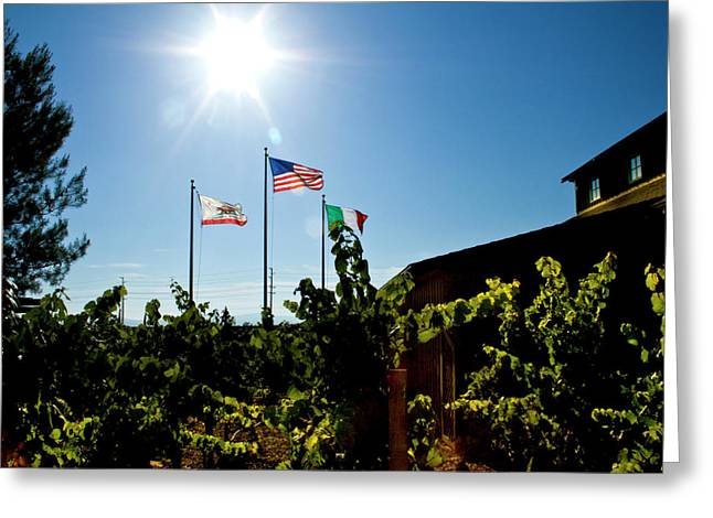 Flags At A Vineyard Greeting Card by Terry Thomas