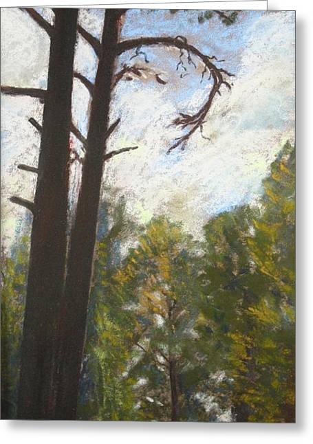 Flagstaff Pines Greeting Card by Drusilla Montemayor