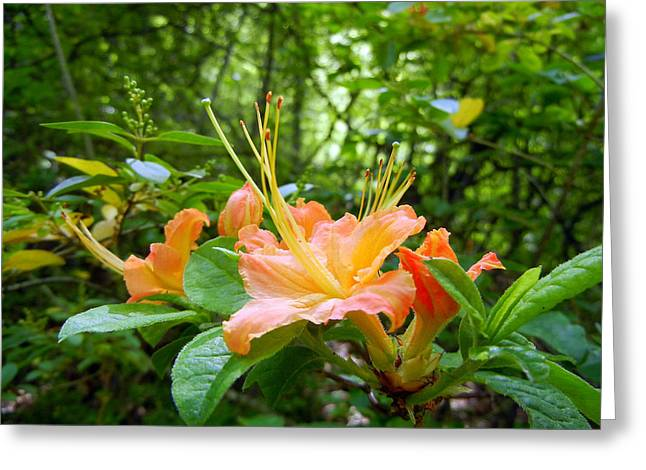 Flame Azalea Greeting Card by Vix Views