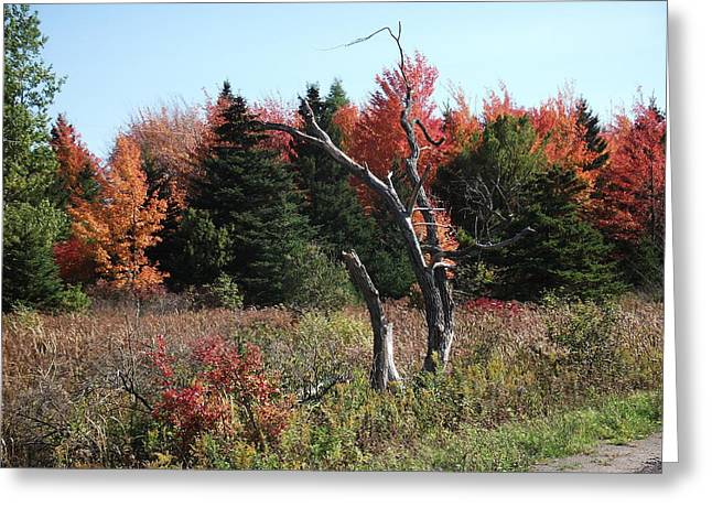 Greeting Card featuring the photograph Flames Of Autumn by Christian Mattison