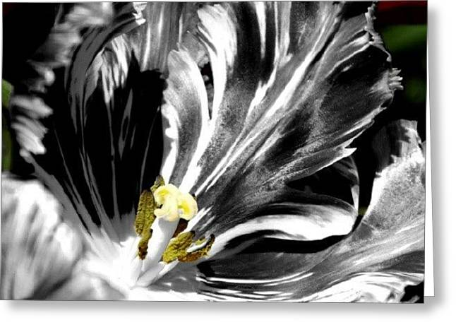 Flaming Flower 1 Greeting Card