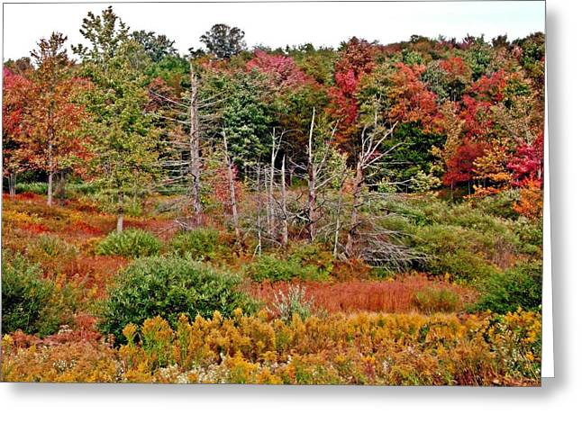 Greeting Card featuring the photograph Flaming Meadow by Christian Mattison