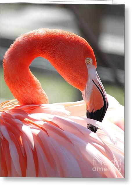 Flamingo Greeting Card by Billie-Jo Miller