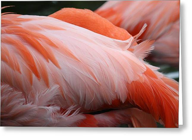 Flamingo Feathers Greeting Card by Andrea  OConnell