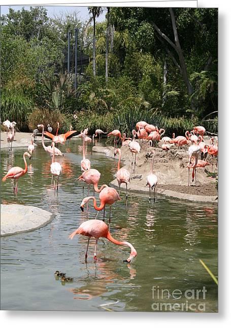 Flamingo Lagoon I Greeting Card