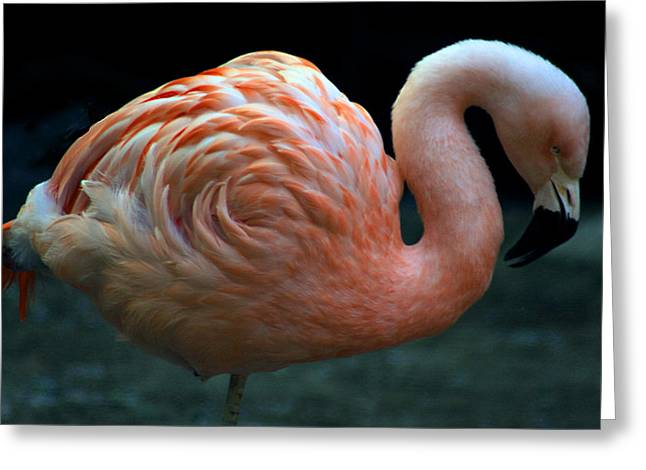Greeting Card featuring the photograph Flamingo by Tammy Espino