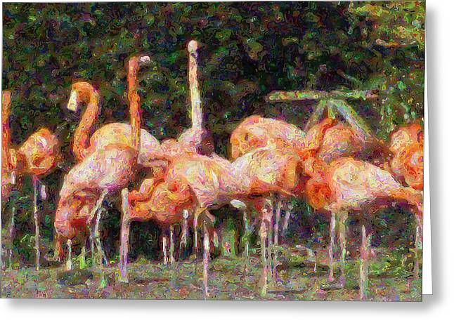 Flamingo's Greeting Card by Fred Whalley