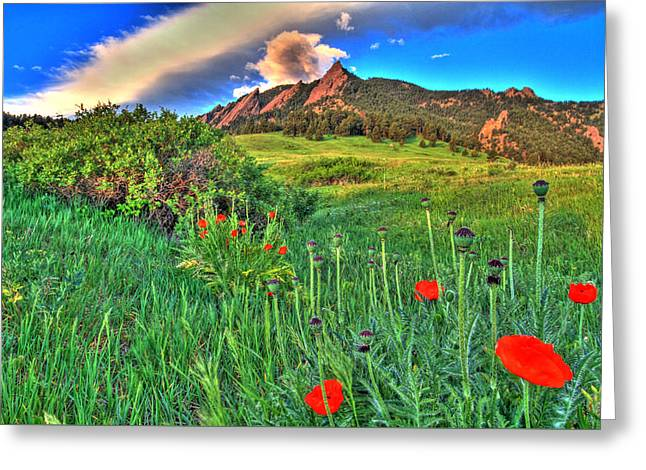 Flatirons And Poppies Greeting Card by Scott Mahon