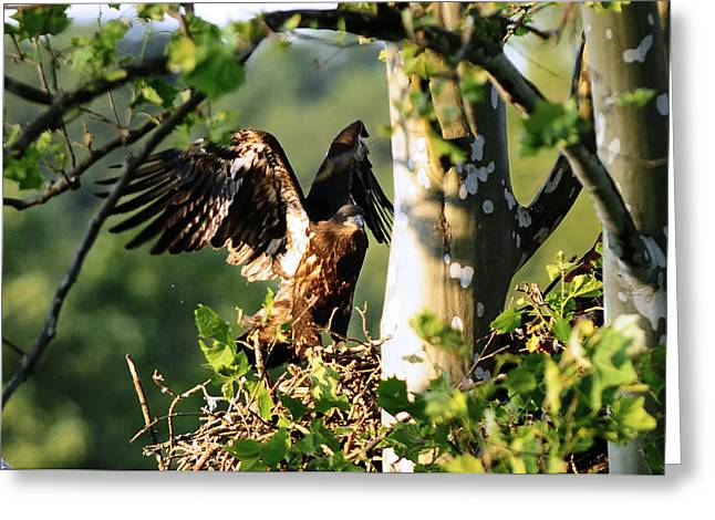 Greeting Card featuring the photograph Fledgling Testing The Wind by Randall Branham