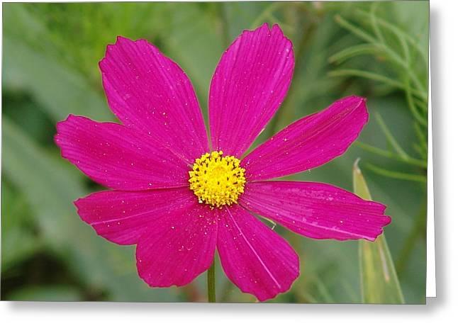 Fleur De California Greeting Card