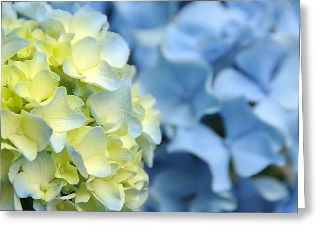 Fleur II Greeting Card by George Crawford
