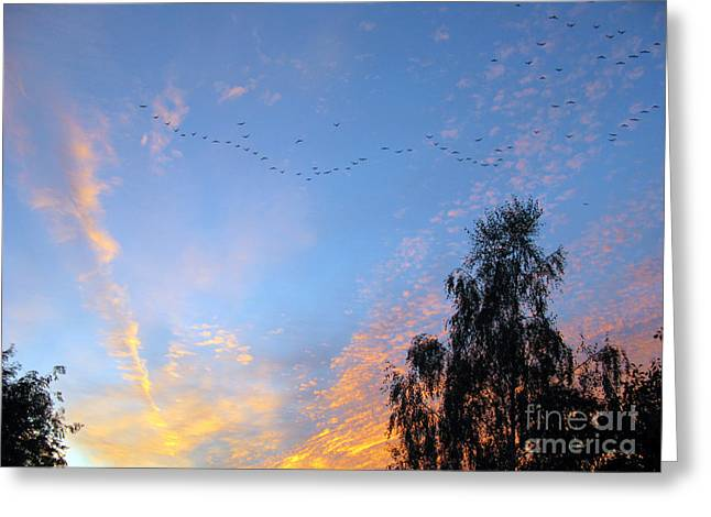 Flight Into The Sunset Greeting Card by Ausra Huntington nee Paulauskaite
