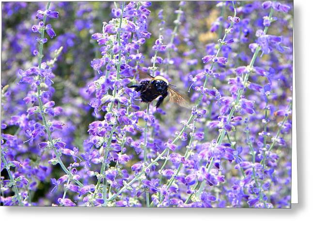 Flight Of The Bumble Bee Greeting Card by Rhiannon Hamm