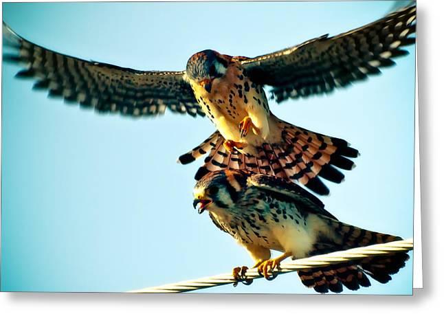 Flight Of The Hawk Greeting Card