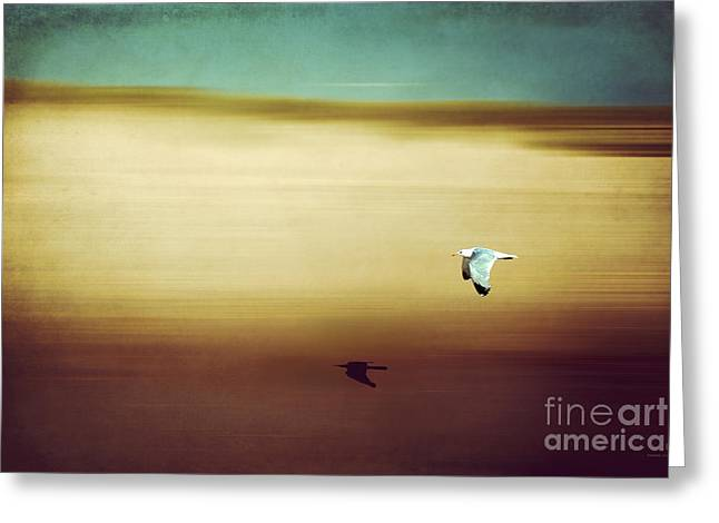 Flight Over The Beach Greeting Card by Hannes Cmarits
