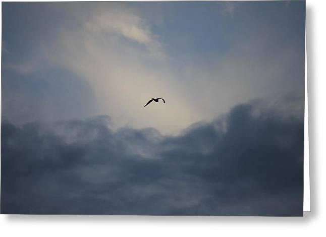 Greeting Card featuring the photograph Flight To Heaven by Penny Meyers