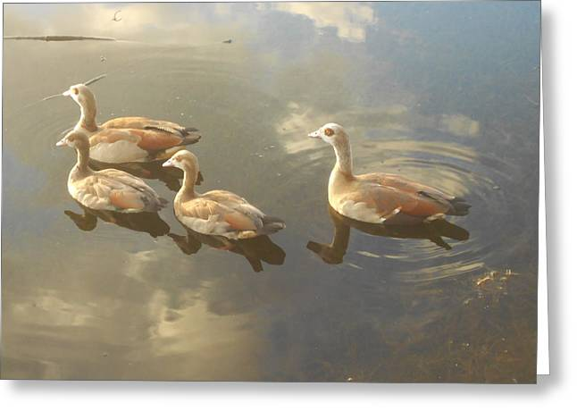 Floating Along Greeting Card by Sheila Silverstein