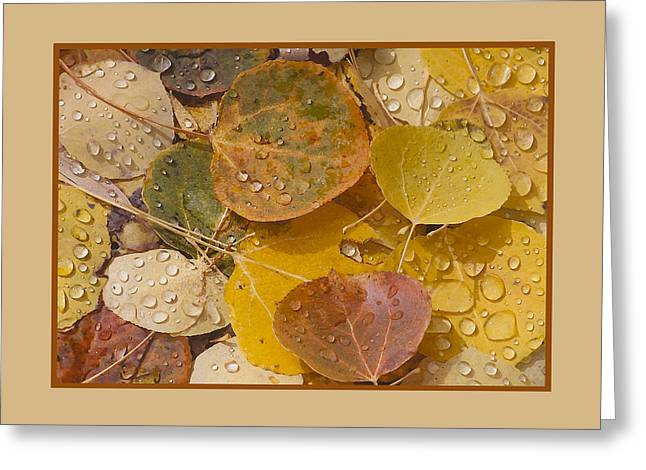 Floating Aspen Leaves Greeting Card