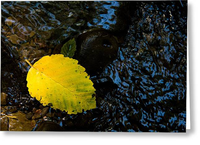 Floating Down The River Greeting Card by Sheri Van Wert