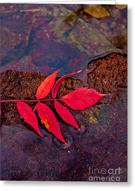 Floating Fall Sumac Greeting Card