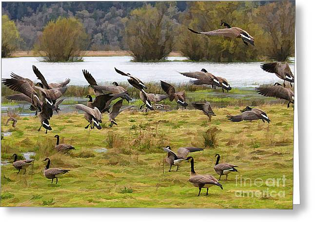 Flock Greeting Card by Billie-Jo Miller