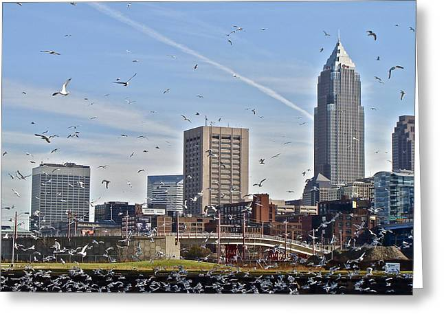 Flock Of Gulls In Cleveland  Greeting Card by MB Matthews