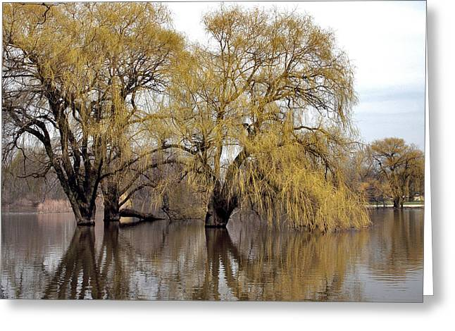 Flooded Trees Greeting Card by Richard Gregurich