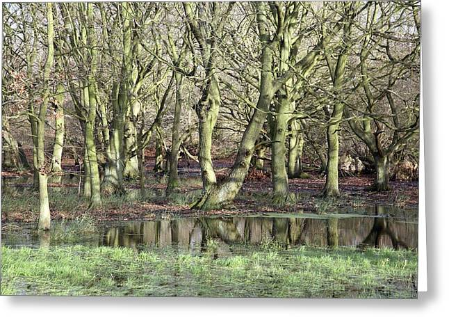 Flooded Trees Greeting Card by Victor De Schwanberg