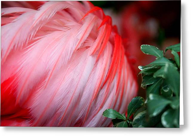 Greeting Card featuring the photograph Flora And Fauna Number One by Lon Casler Bixby