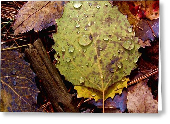 Flora Autumn Leaves On The Forest Floor Greeting Card