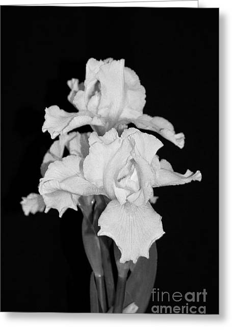 Floral Black And White Iris Flower Bouquet Greeting Card