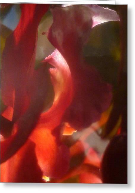 Floral Flamenco Greeting Card