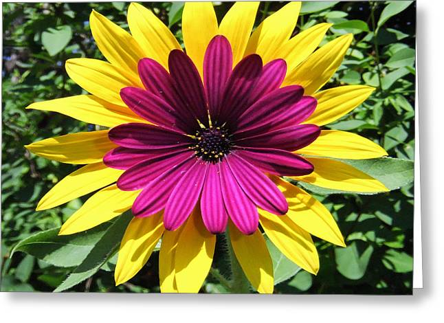 Floral Fusion Greeting Card by Eric Kempson