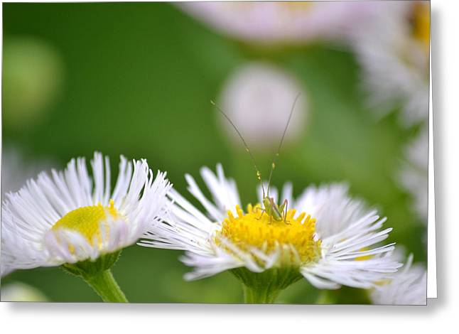 Greeting Card featuring the photograph Floral Launch-pad by JD Grimes