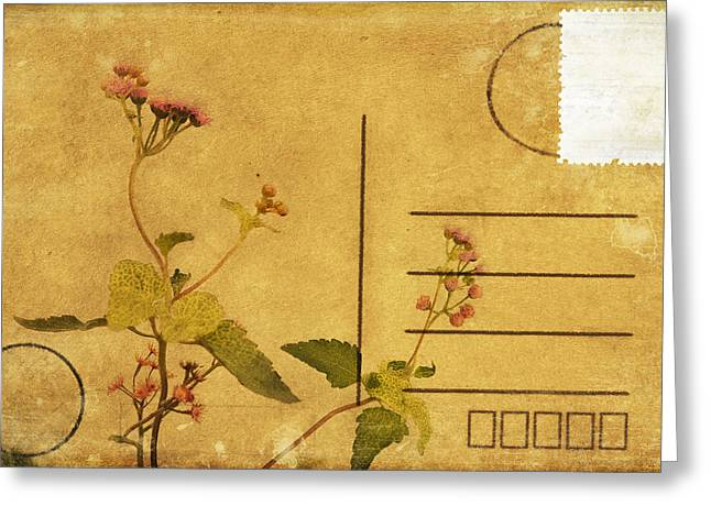Floral Pattern On Postcard Greeting Card by Setsiri Silapasuwanchai