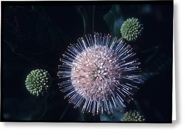 Greeting Card featuring the photograph Floral Solar System  by Wanda Brandon