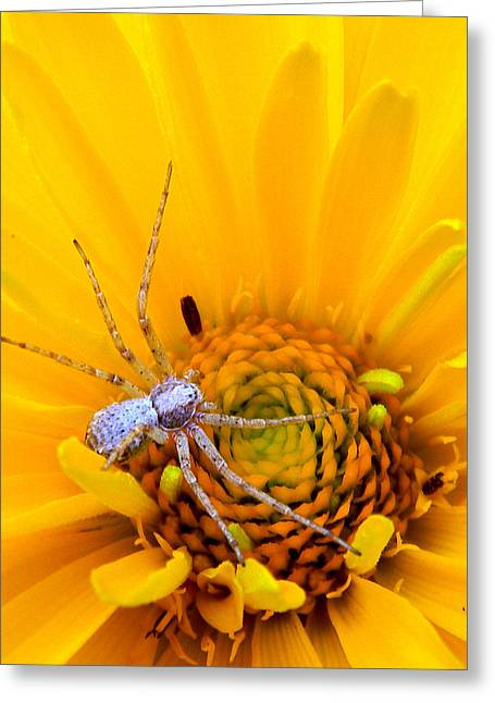 Floral Spider Greeting Card