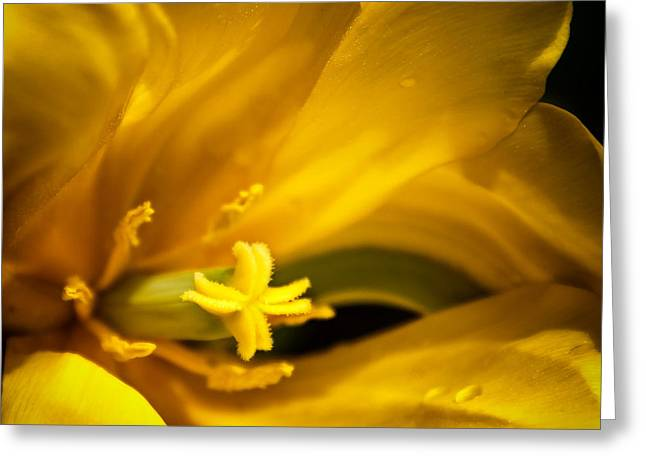 Floral Star Greeting Card by Denis Lemay