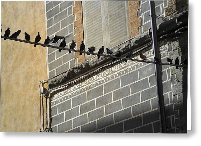 Florentine Pigeons Greeting Card