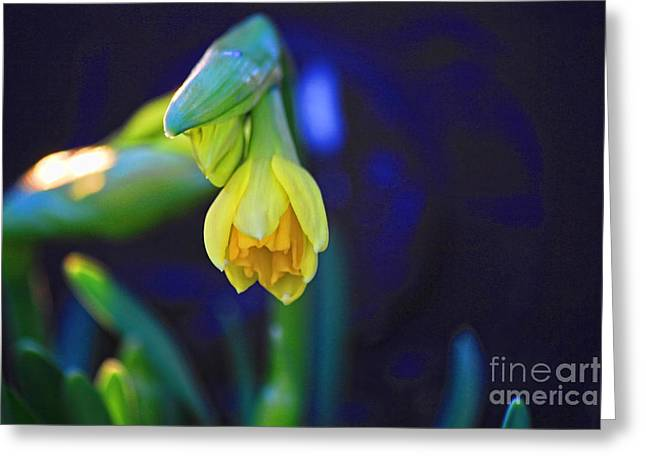 Florescence Greeting Card by Miso Jovicic
